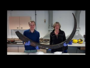 Mammoth tusk, Sedgwick Museum